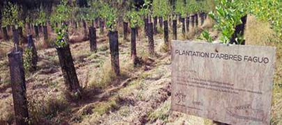 faguo-plantation vignette
